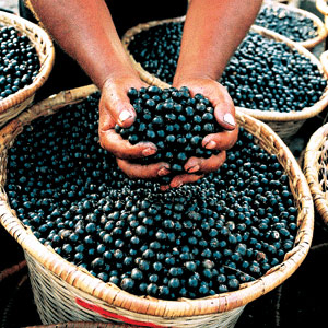 What You Need to Know About Acai Berry